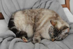 Disappearance alert Cat Female , 13 years Sagres Portugal