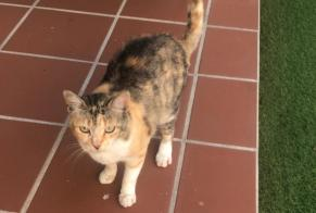 Discovery alert Cat Female , 2 years Canidelo Portugal