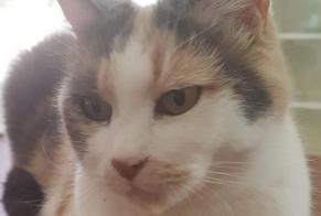 Disappearance alert Cat miscegenation Female , 1 years Corroios Portugal