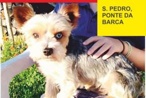 Disappearance alert Dog  Male , 3 years Ponte da Barca Portugal